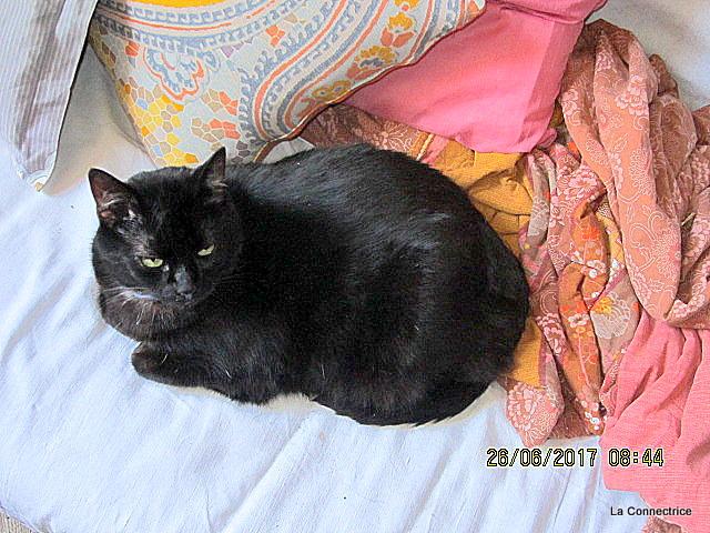 chatte noire plate Miley Cirus vidéo de sexe